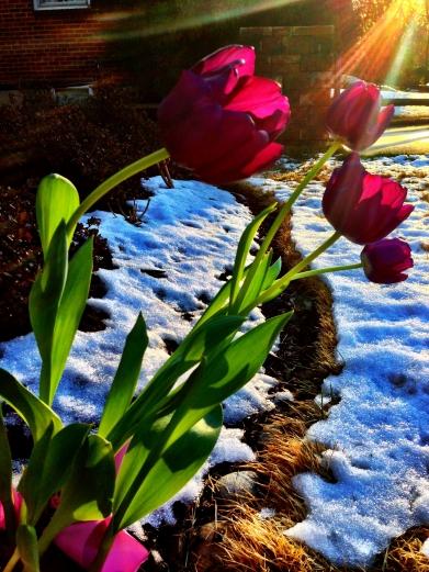 Flowers snow